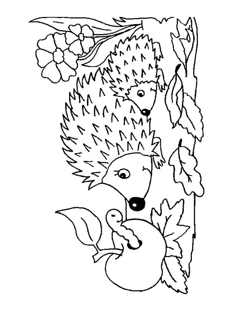 pictures of hedgehogs to colour hedge coloring pages to pictures colour hedgehogs of