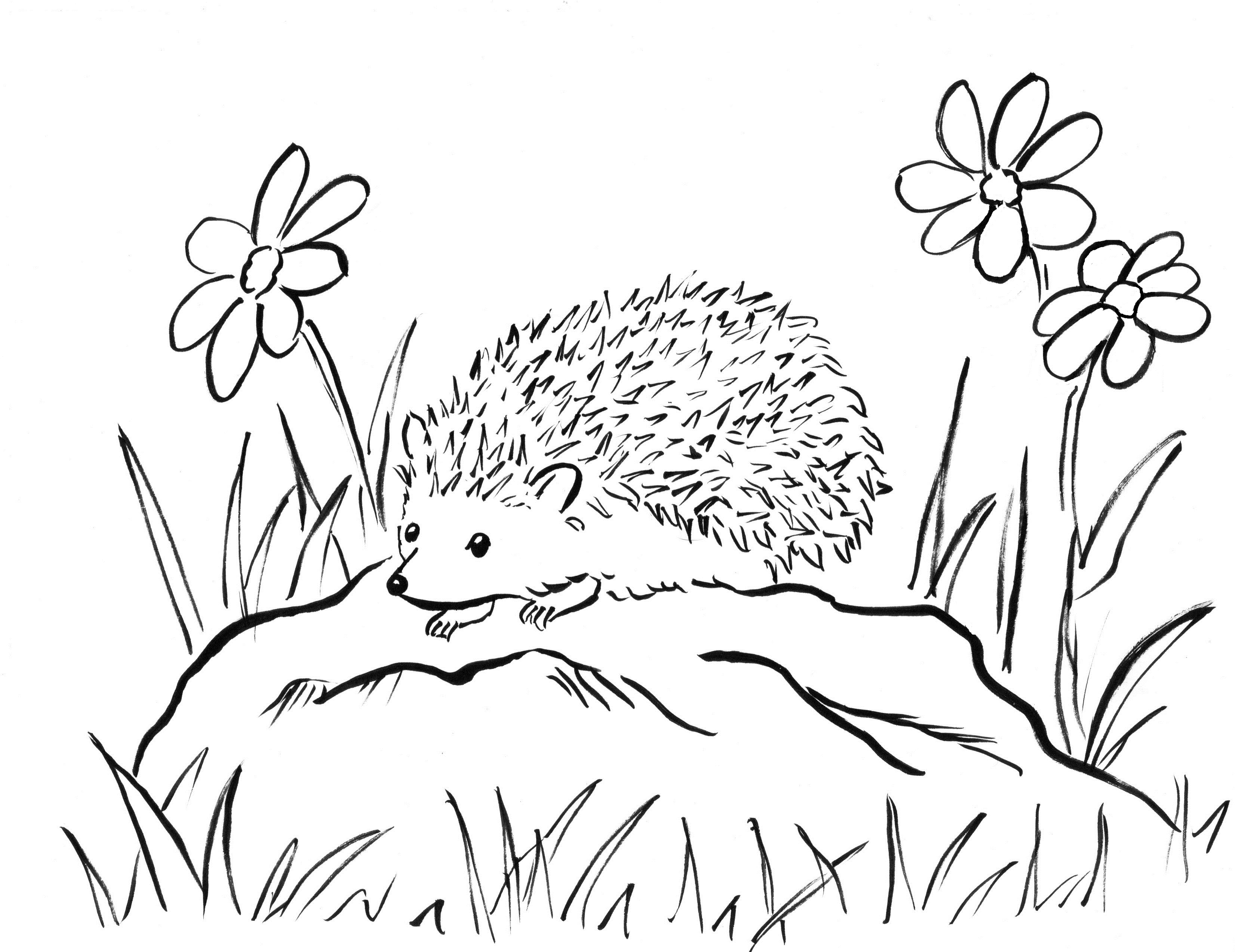 pictures of hedgehogs to colour hedgehog coloring page getcoloringpagescom hedgehogs of to pictures colour