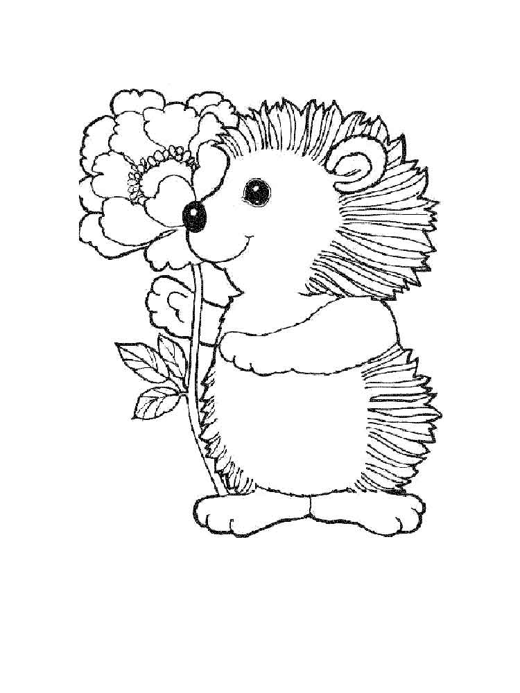pictures of hedgehogs to colour hedgehog coloring pages download and print hedgehog of to hedgehogs pictures colour