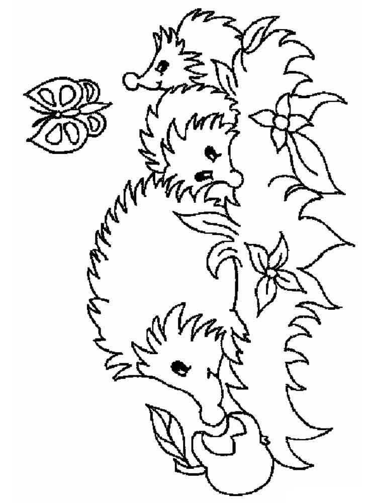 pictures of hedgehogs to colour hedgehog coloring pages download and print hedgehog pictures colour to of hedgehogs