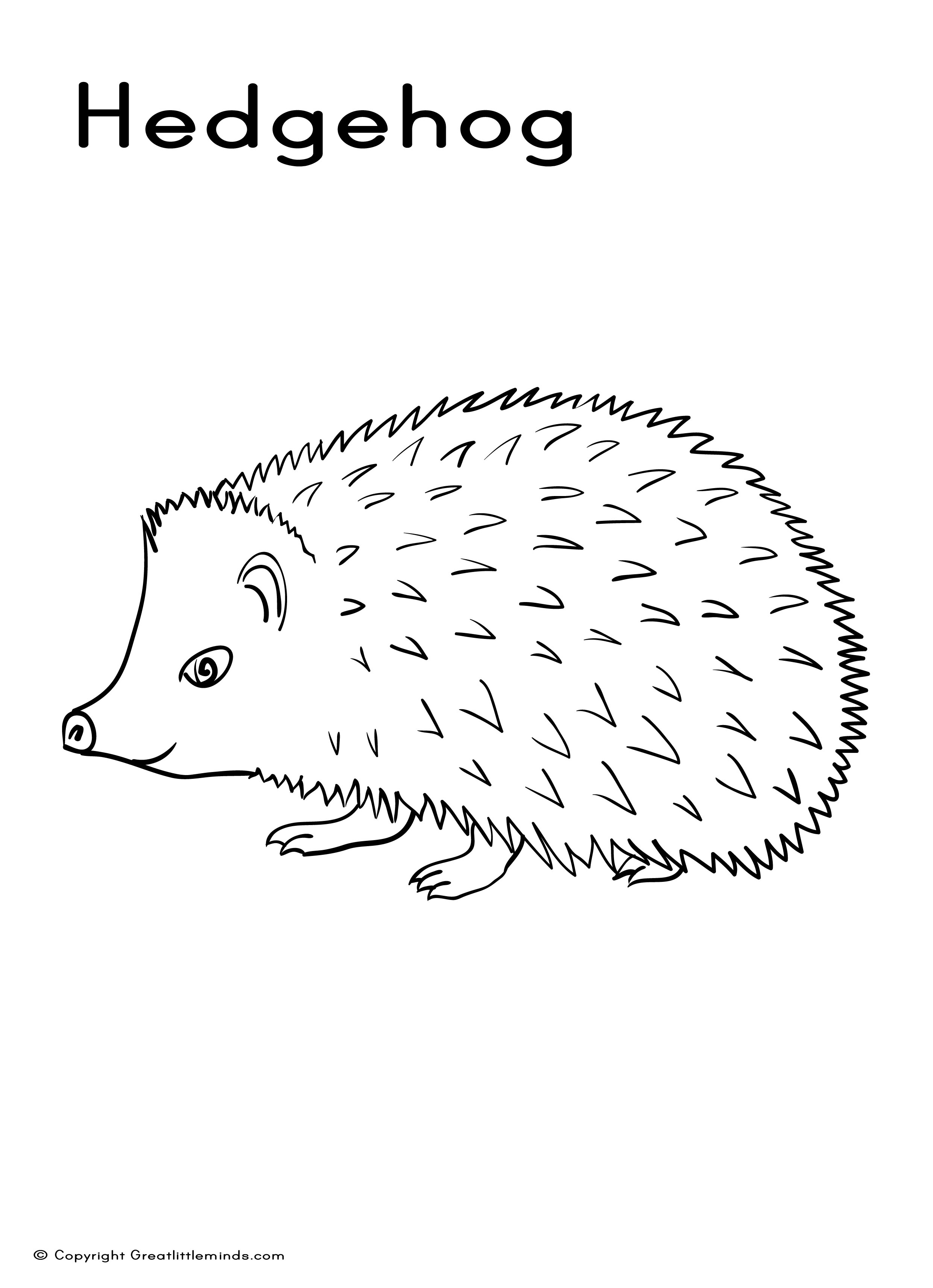 pictures of hedgehogs to colour hedgehog coloring pages kidsuki pictures hedgehogs to of colour