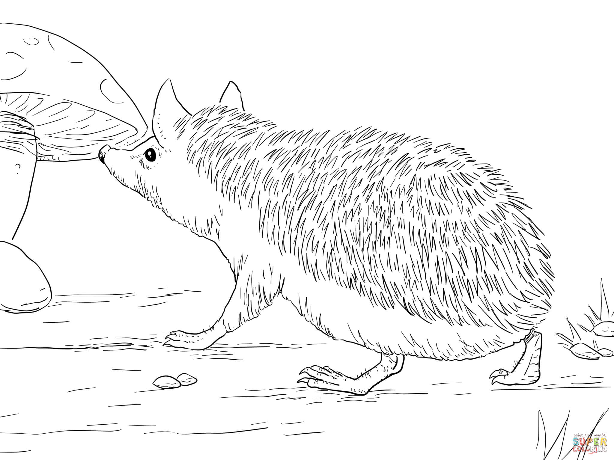 pictures of hedgehogs to colour hedgehog coloring pages to download and print for free of hedgehogs to colour pictures