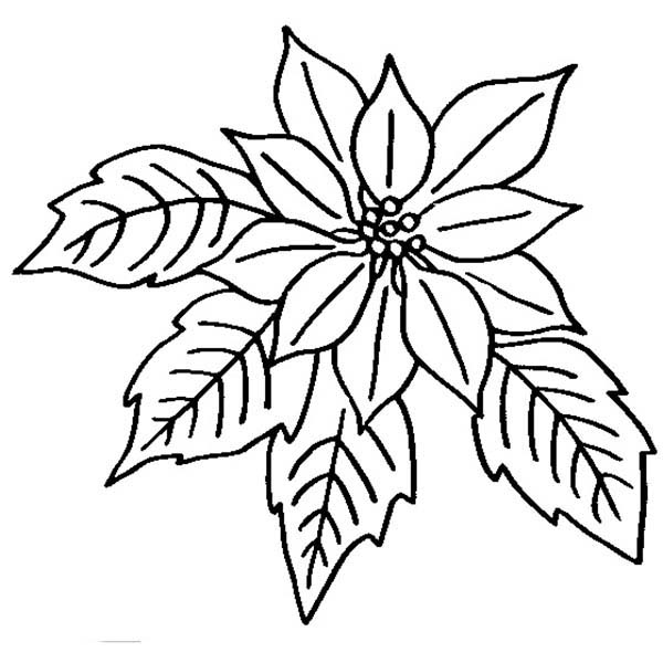 poinsettia coloring pages christmas poinsettia coloring page at getcoloringscom coloring pages poinsettia
