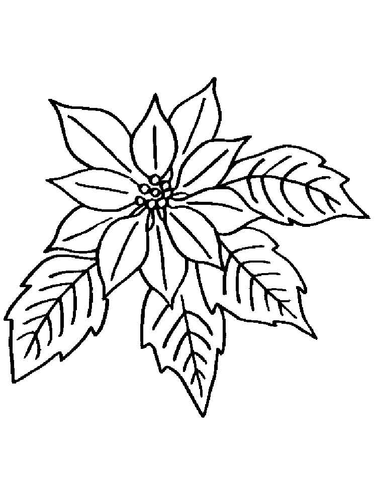 poinsettia coloring pages christmas poinsettia coloring page at getcoloringscom poinsettia coloring pages