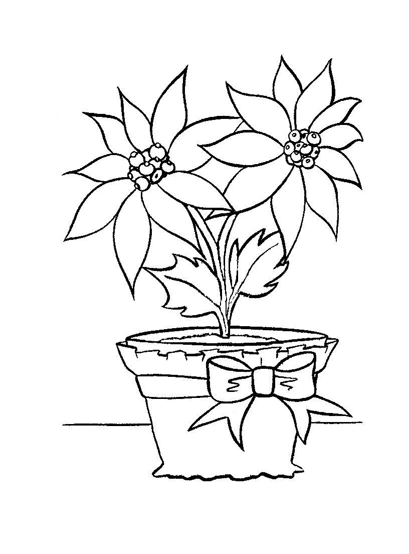 poinsettia coloring pages fresh poinsettia flower in a bucket coloring page poinsettia coloring pages