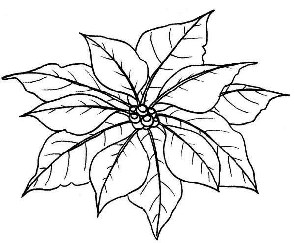 poinsettia coloring pages poinsettia flower coloring pages download and print coloring pages poinsettia