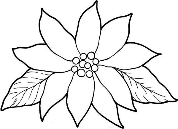 poinsettia coloring pages poinsettia flower coloring pages download and print pages poinsettia coloring