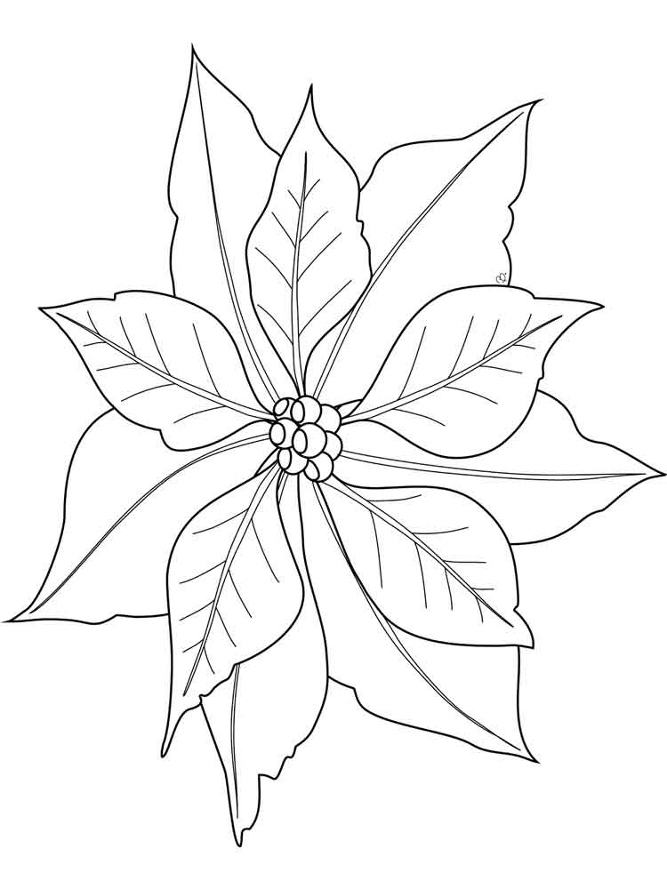 poinsettia coloring pages poinsettia in bloom for poinsettia day coloring page coloring pages poinsettia
