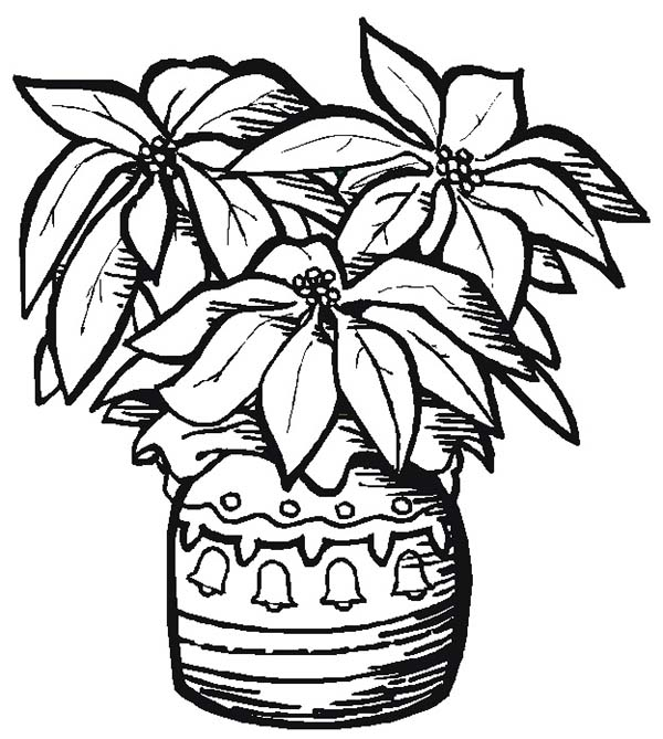 poinsettia coloring pages top 10 poinsettia coloring page for kids coloring pages poinsettia
