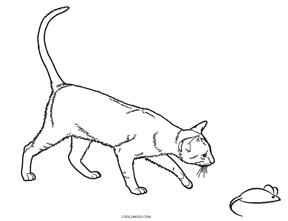 printable cat pictures to color a simple free printable cat coloring sheet printable pictures cat color to