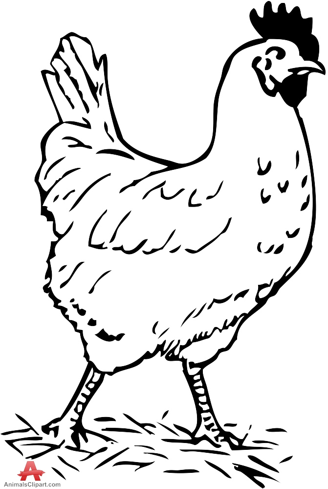 printable chicken chicken outline drawing at getdrawings free download chicken printable