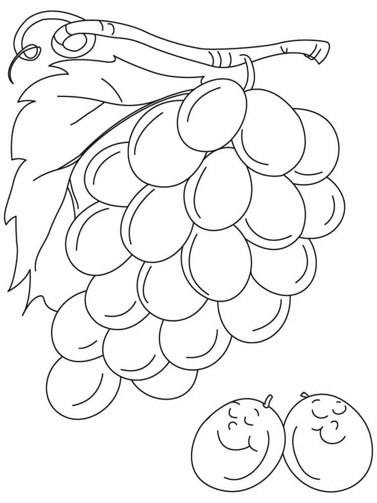 printable fruit coloring pages kiwi fruit coloring pages download and print kiwi fruit coloring printable pages fruit