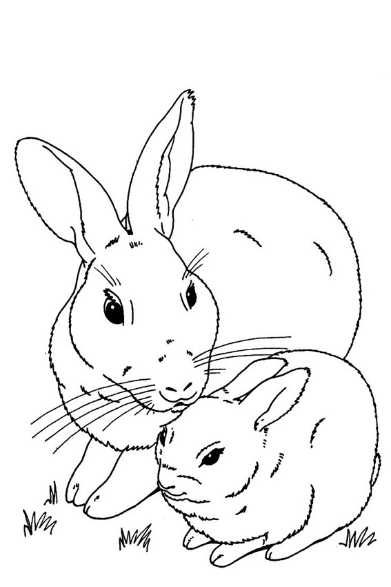 rabbit pictures to colour and print bunny coloring pages best coloring pages for kids to print pictures rabbit and colour