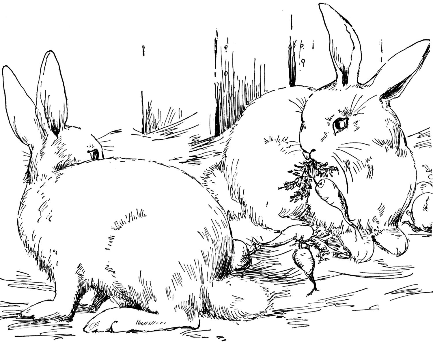 rabbit pictures to colour and print coloring pages of cute baby bunnies at getcoloringscom pictures rabbit print colour and to