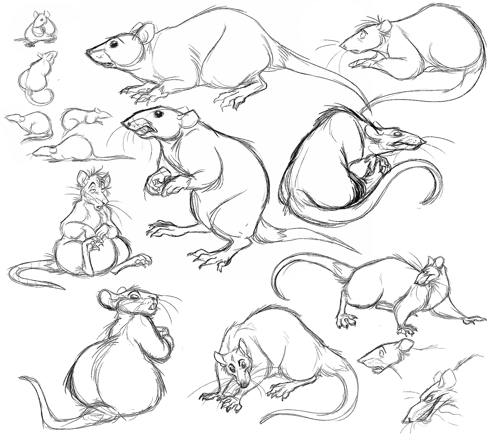 rat drawing rat cartoon drawing in 4 steps with photoshop drawing rat