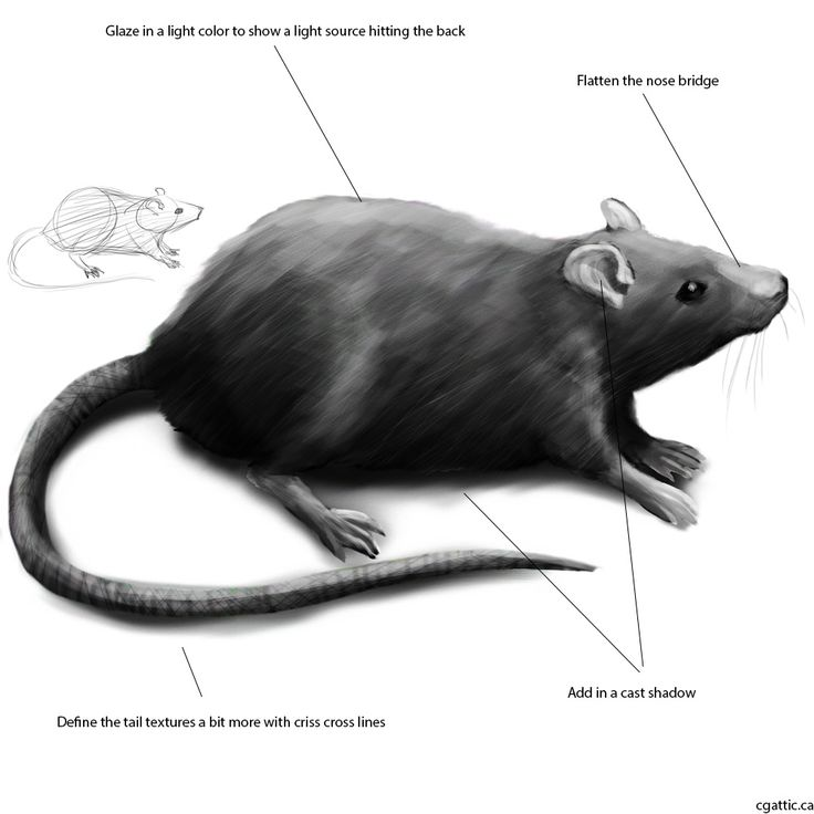 rat drawing rat sketches with more detail by never mor on deviantart rat drawing