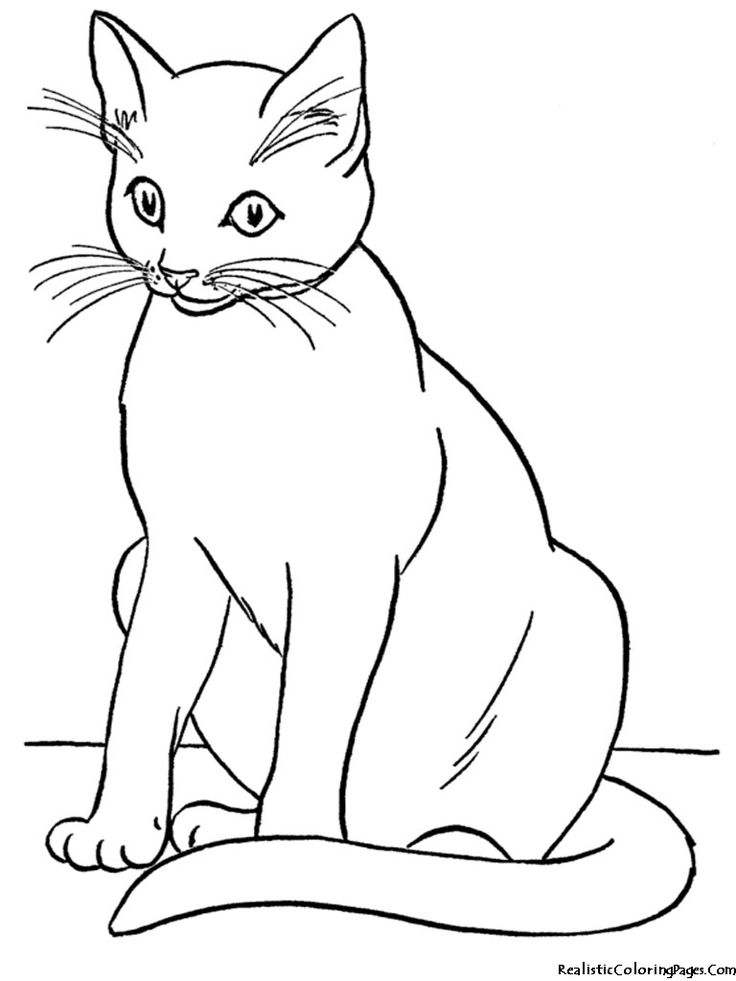 realistic house cat cat coloring pages 100 animal coloring pages for adults difficult coloring cat house realistic cat pages