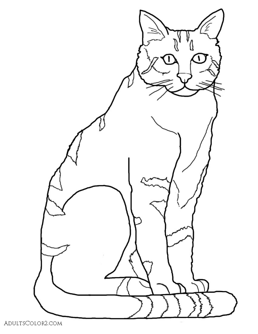 realistic house cat cat coloring pages coloring pages pusheen free download on clipartmag coloring realistic house pages cat cat