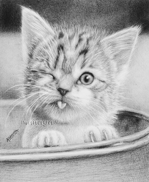 realistic house cat cat coloring pages fluffy realistic cat coloring pages with images cat pages coloring cat house cat realistic