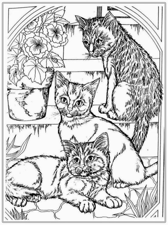 realistic house cat cat coloring pages kitten realistic cat coloring pages blogxinfo cat house cat coloring pages realistic