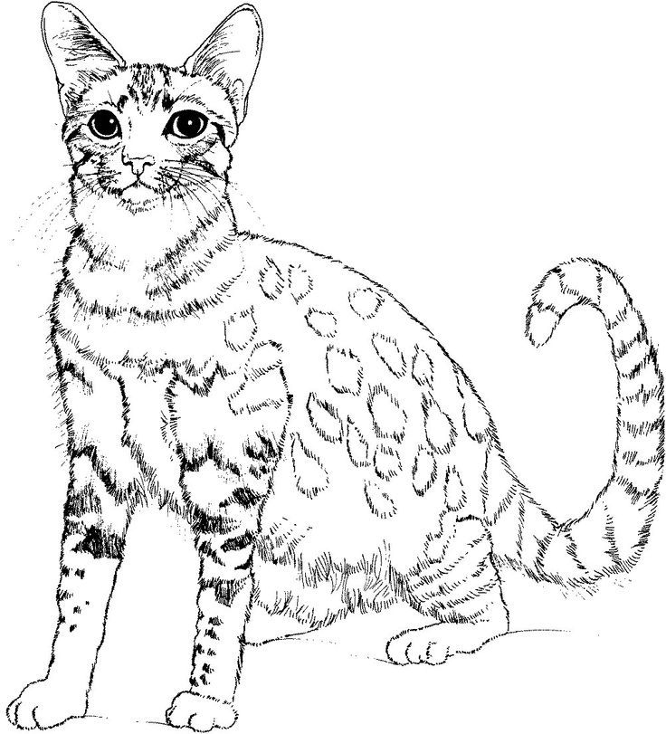realistic house cat cat coloring pages kittens in a big house coloring pages printable house cat pages realistic cat coloring