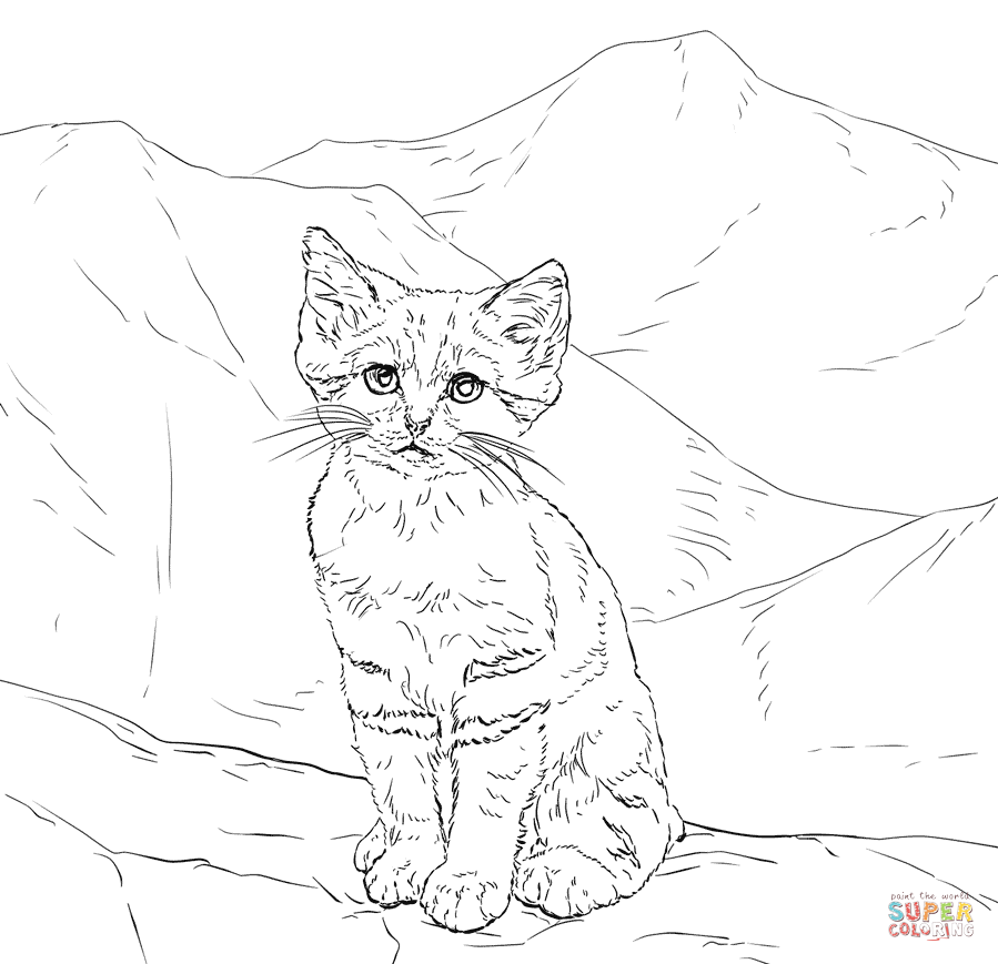 realistic house cat cat coloring pages realistic cat coloring page for kids animal coloring pages cat realistic house cat coloring