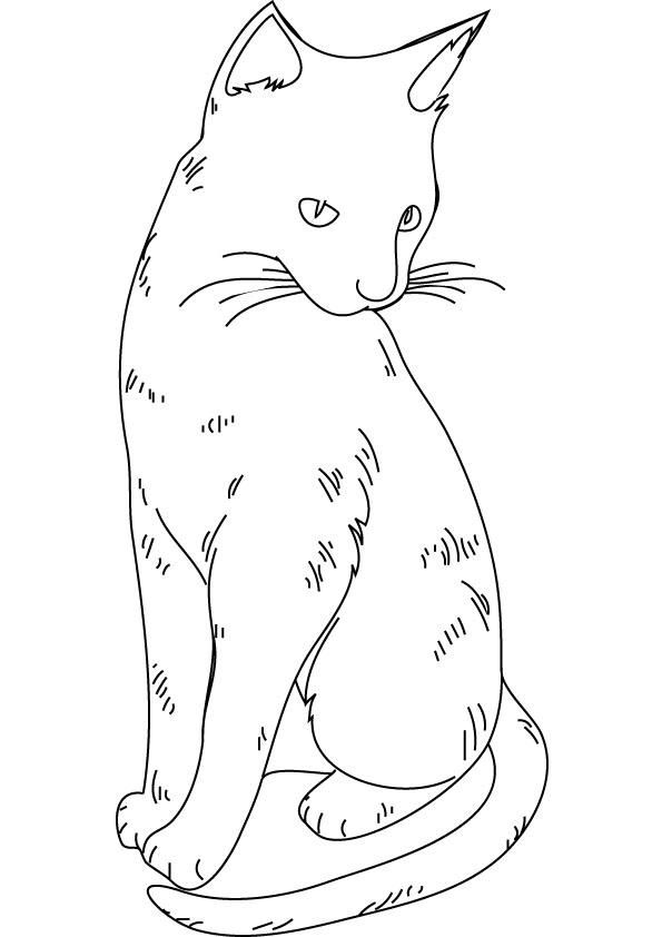 realistic house cat cat coloring pages realistic cat coloring pages coloring home cat cat pages house realistic coloring