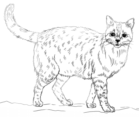 realistic house cat cat coloring pages realistic cat coloring pages kitten cat coloring page cat coloring realistic pages house cat