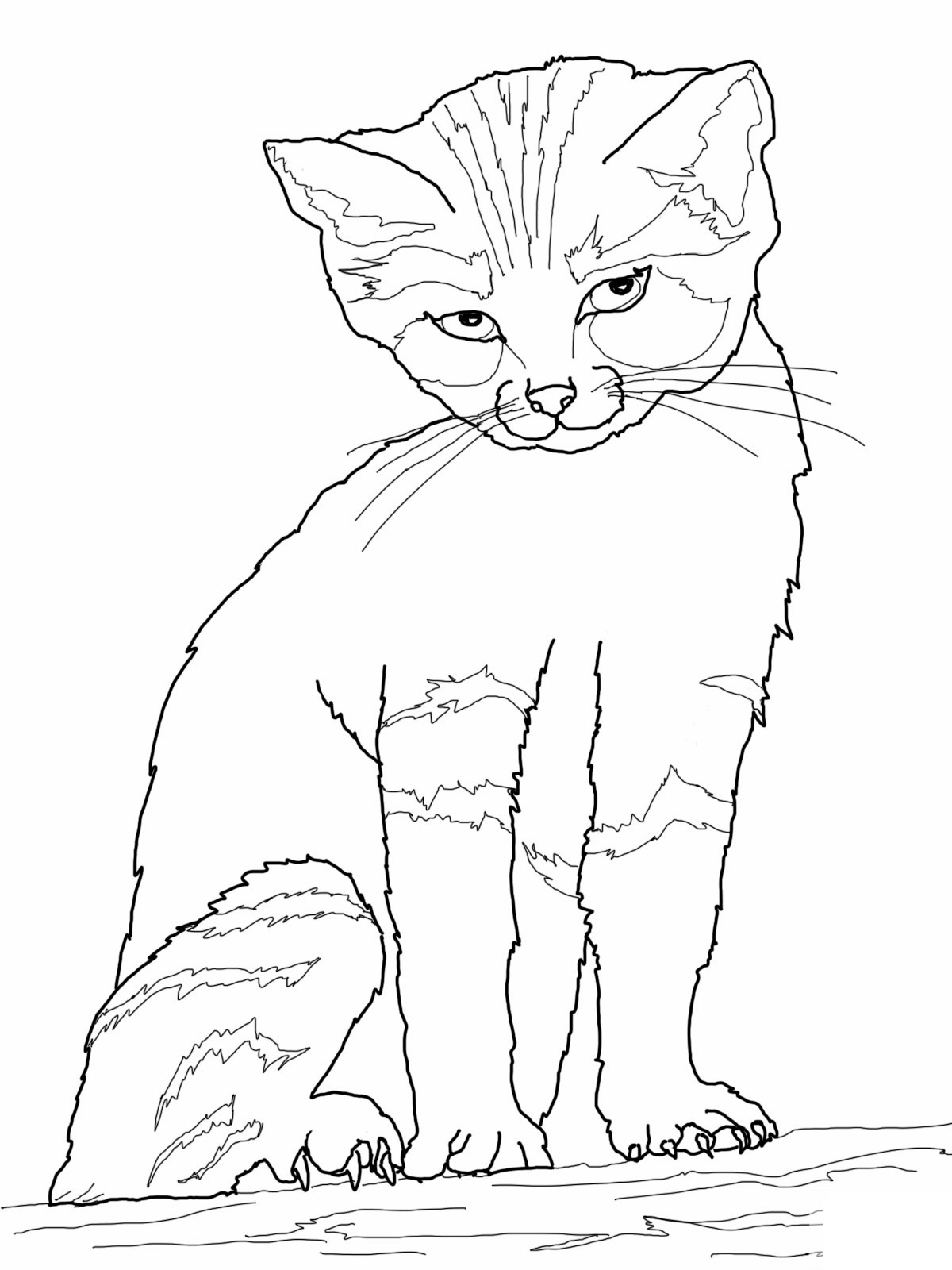 realistic house cat cat coloring pages realistic kitten drawing at getdrawings free download coloring cat pages house cat realistic