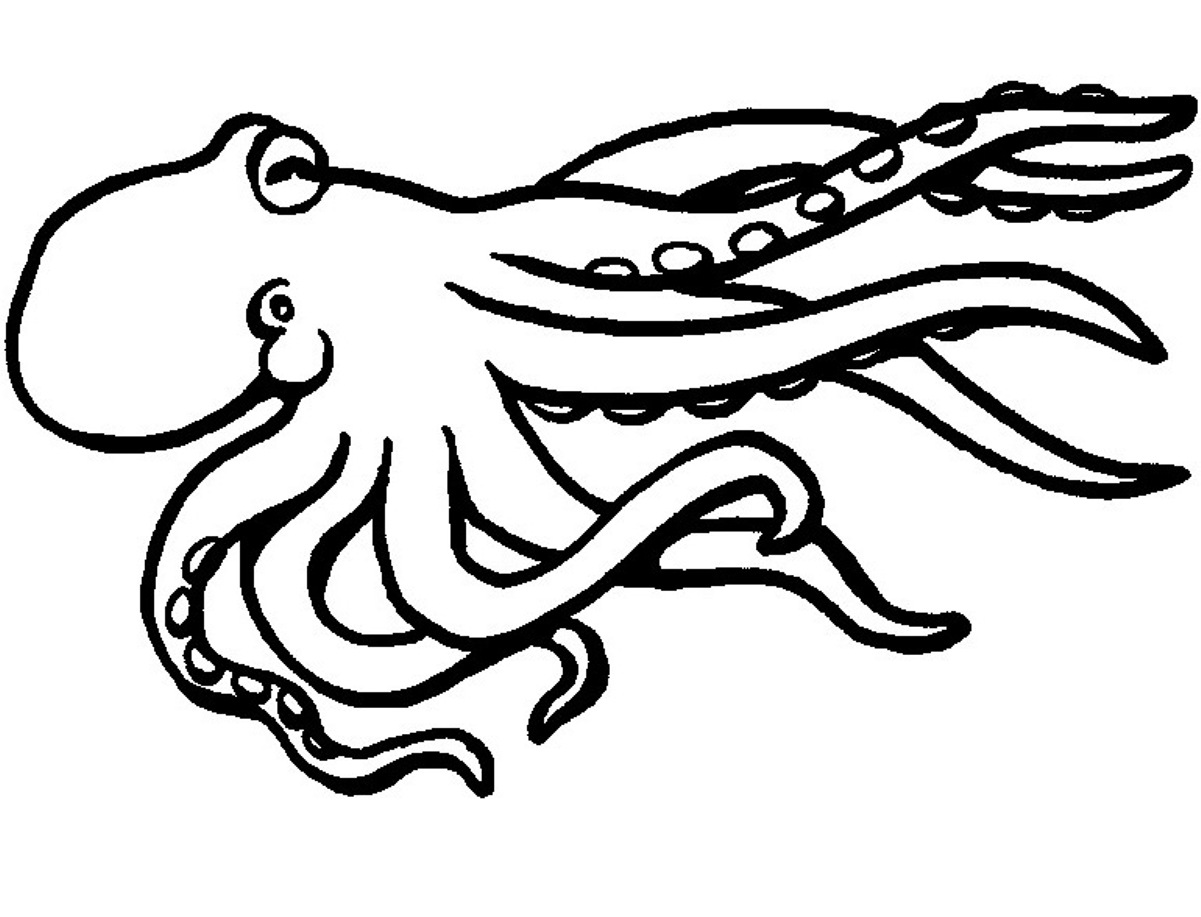 realistic octopus coloring page image result for realistic animal coloring pages for page octopus coloring realistic