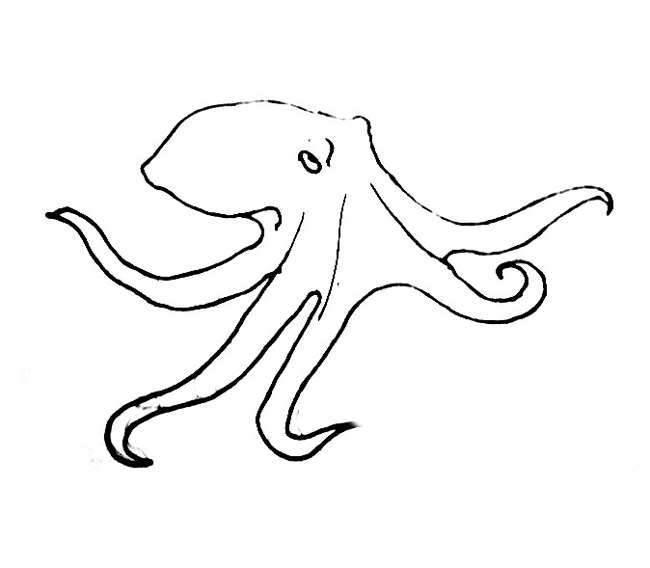 realistic octopus coloring page octopus coloring pages coloring page octopus realistic