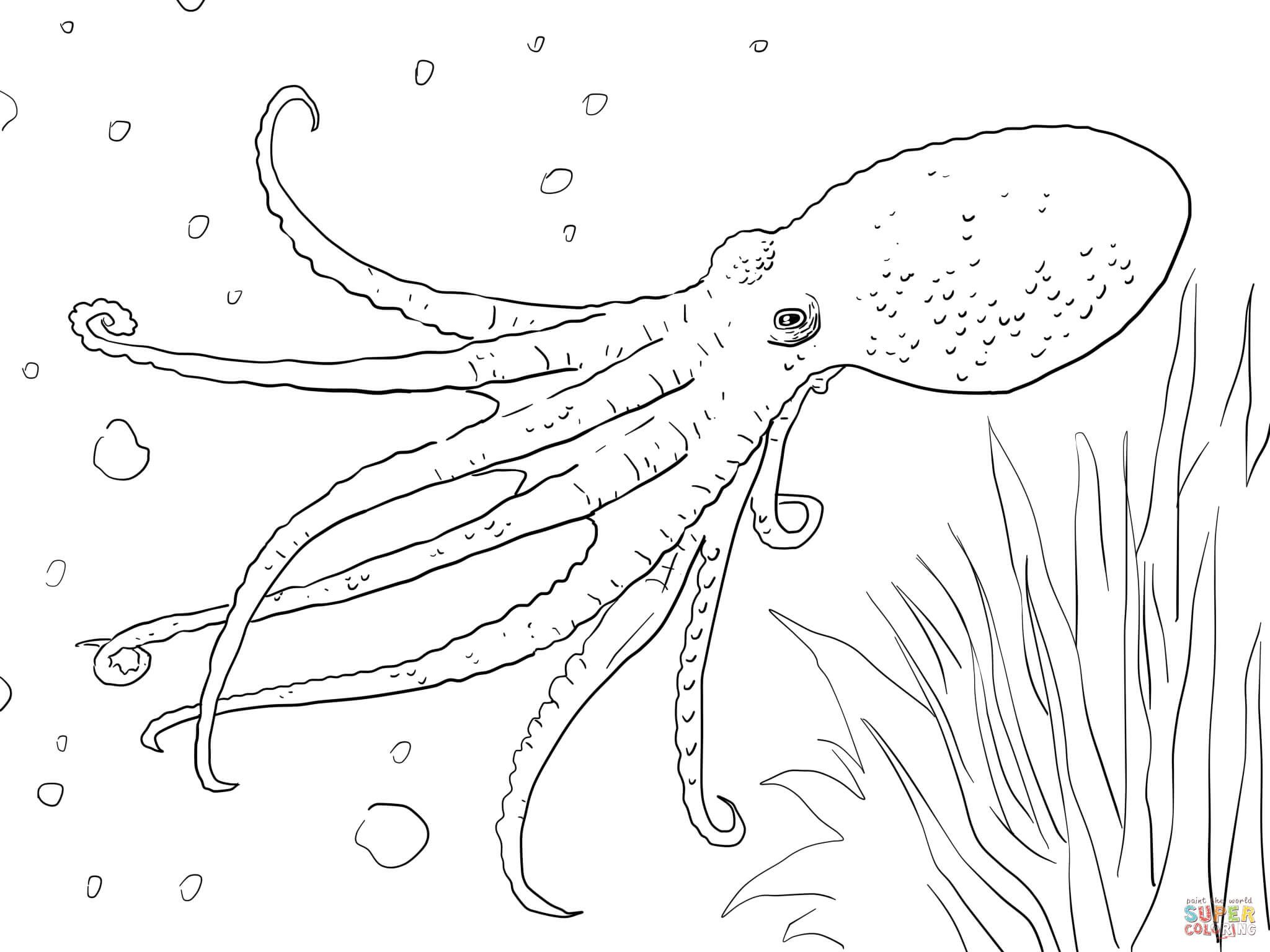realistic octopus coloring page octopus coloring pages kiddo page realistic octopus coloring