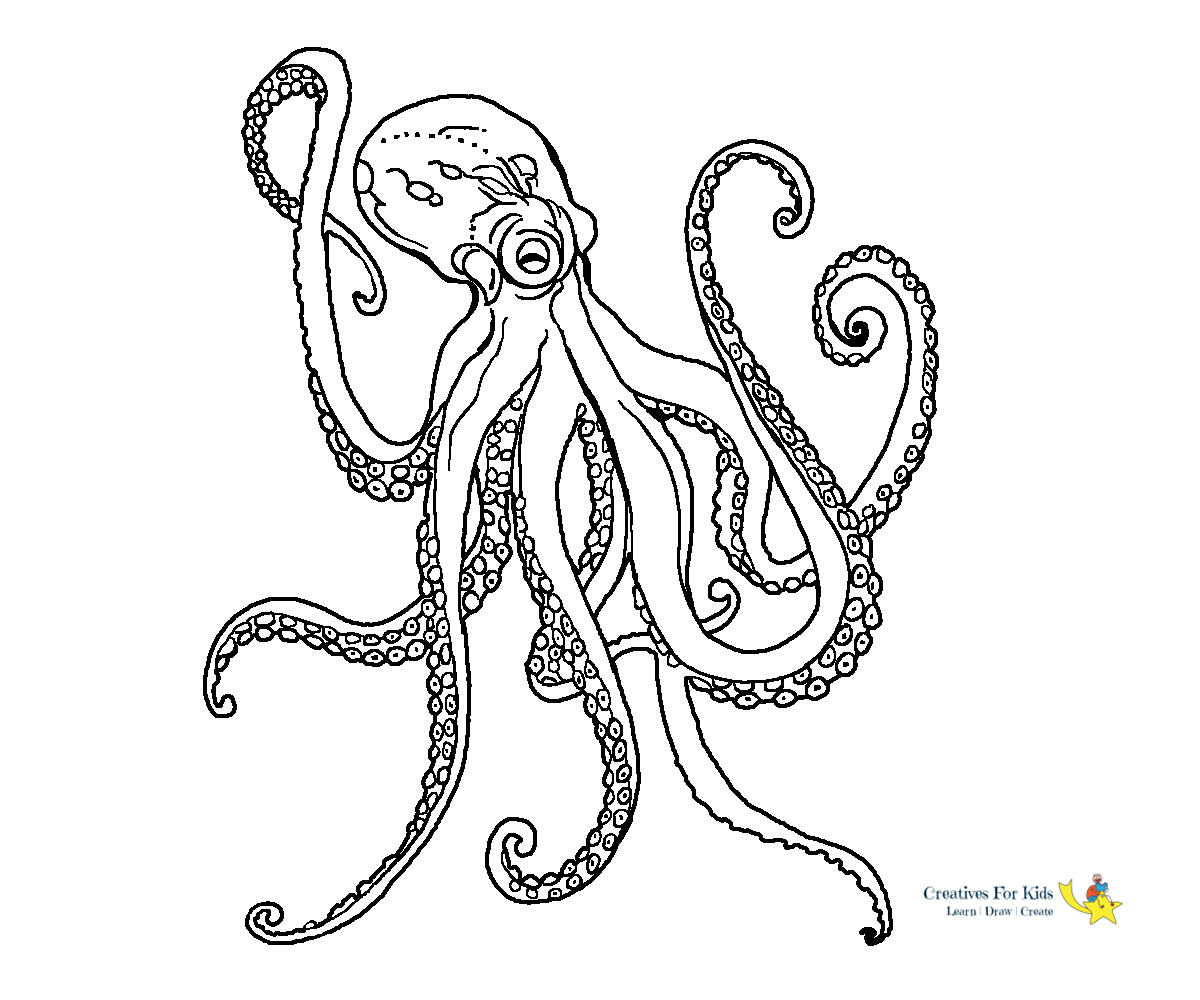 realistic octopus coloring page octopus coloring pages realistic octopus page coloring