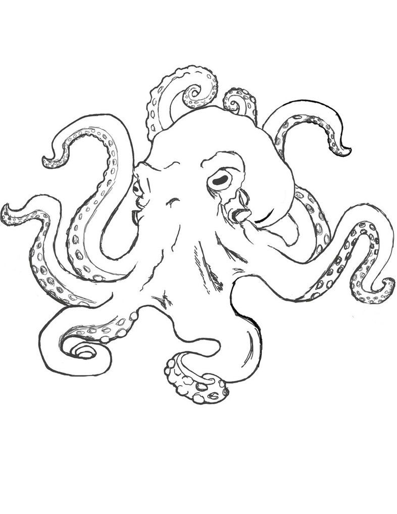 realistic octopus coloring page octopus drawing octopus art drawing octopus drawing octopus realistic coloring page
