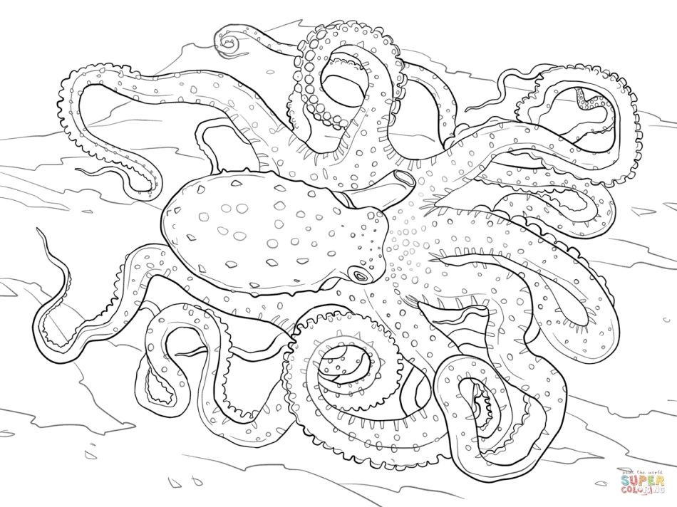 realistic octopus coloring page octopus outline clipartsco realistic octopus page coloring