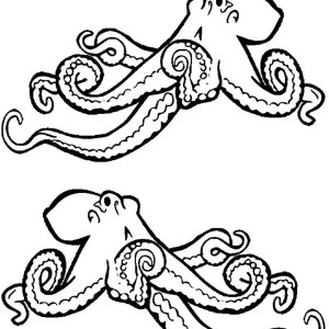 realistic octopus coloring page realistic octopus coloring page clipart panda free octopus page coloring realistic