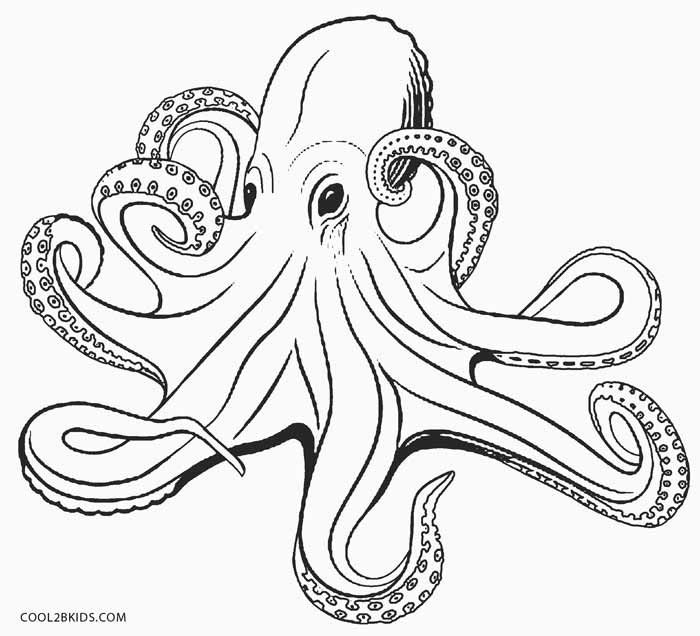 realistic octopus coloring page realistic octopus coloring page giant pacific octopus realistic coloring page octopus