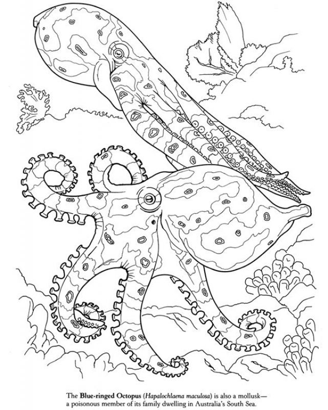 realistic octopus coloring page realistic octopus coloring pages get coloring pages octopus coloring page realistic