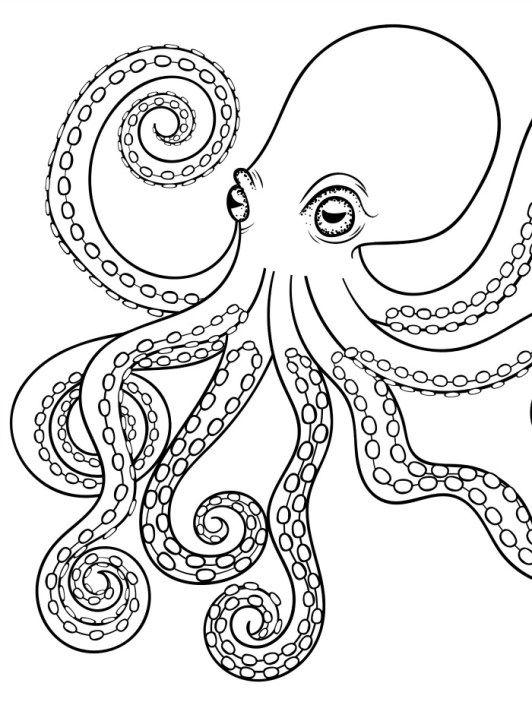 realistic octopus coloring page realistic octopus coloring pages get coloring pages page realistic coloring octopus