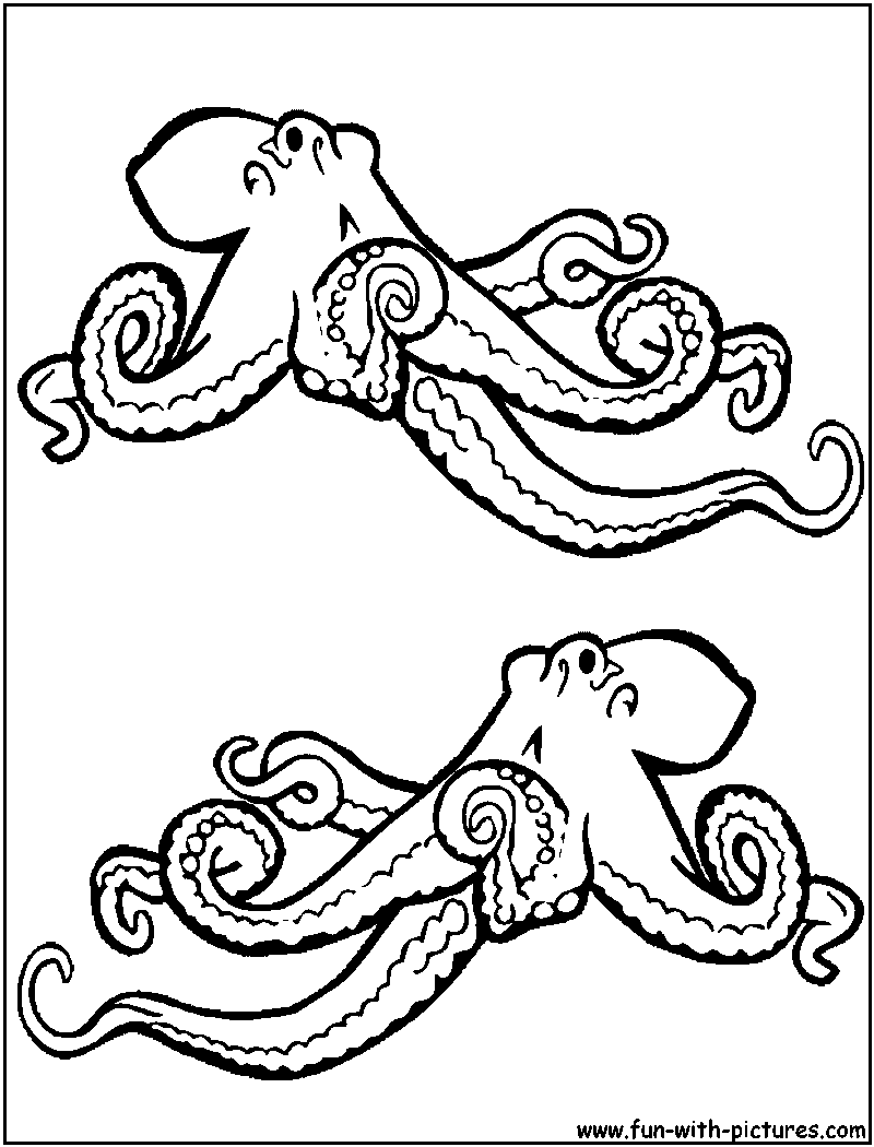 realistic octopus coloring page realistic octopus drawing at getdrawings free download octopus realistic coloring page