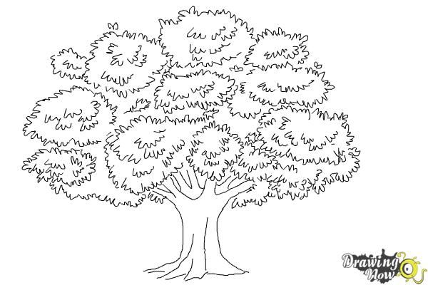 realistic tree tree coloring pages earth day coloring pages make and takes tree coloring pages realistic tree