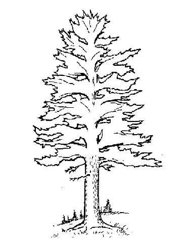 realistic tree tree coloring pages free easy to print christmas tree coloring pages tulamama tree tree realistic coloring pages