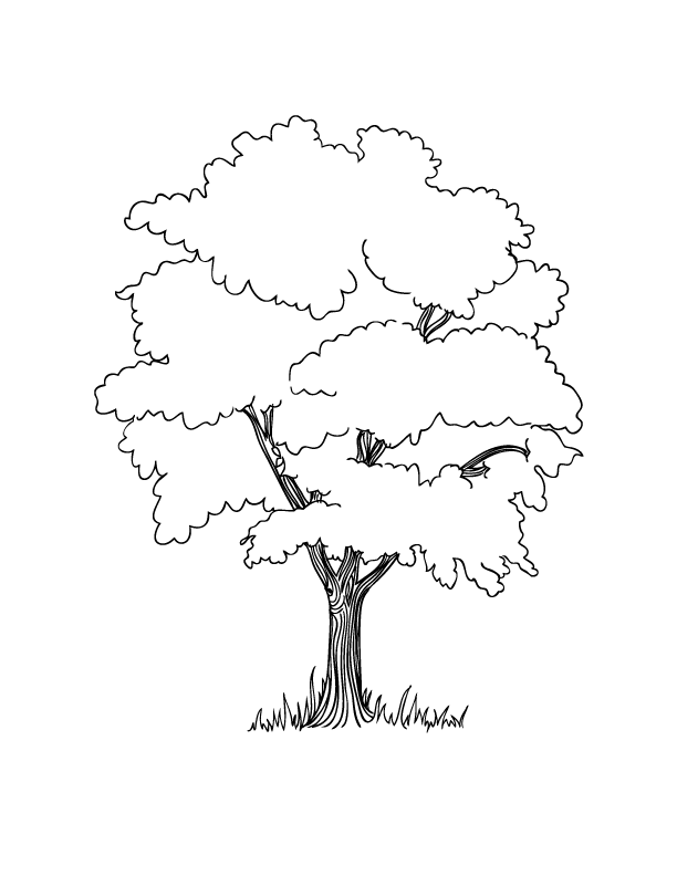 realistic tree tree coloring pages free printable tree coloring pages for kids cool2bkids coloring pages tree tree realistic