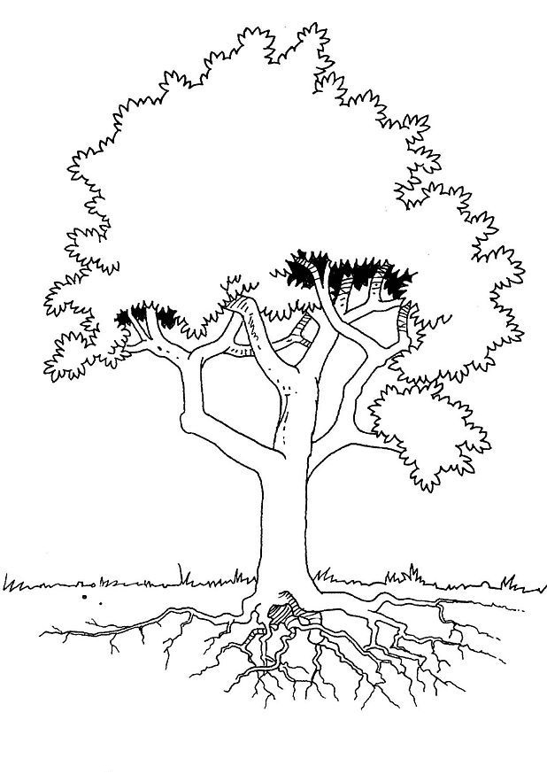 realistic tree tree coloring pages tree trunkcoloring page coloring home tree coloring pages tree realistic