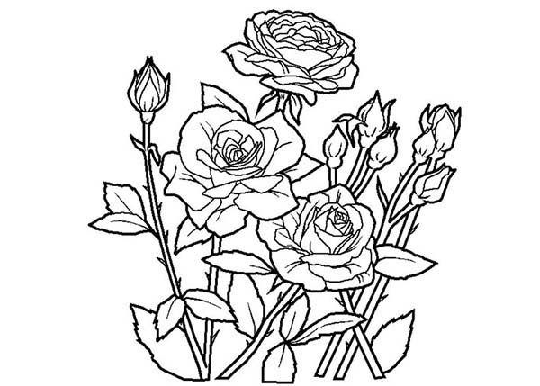 rose colouring pages bouquets coloring pages coloring home rose pages colouring
