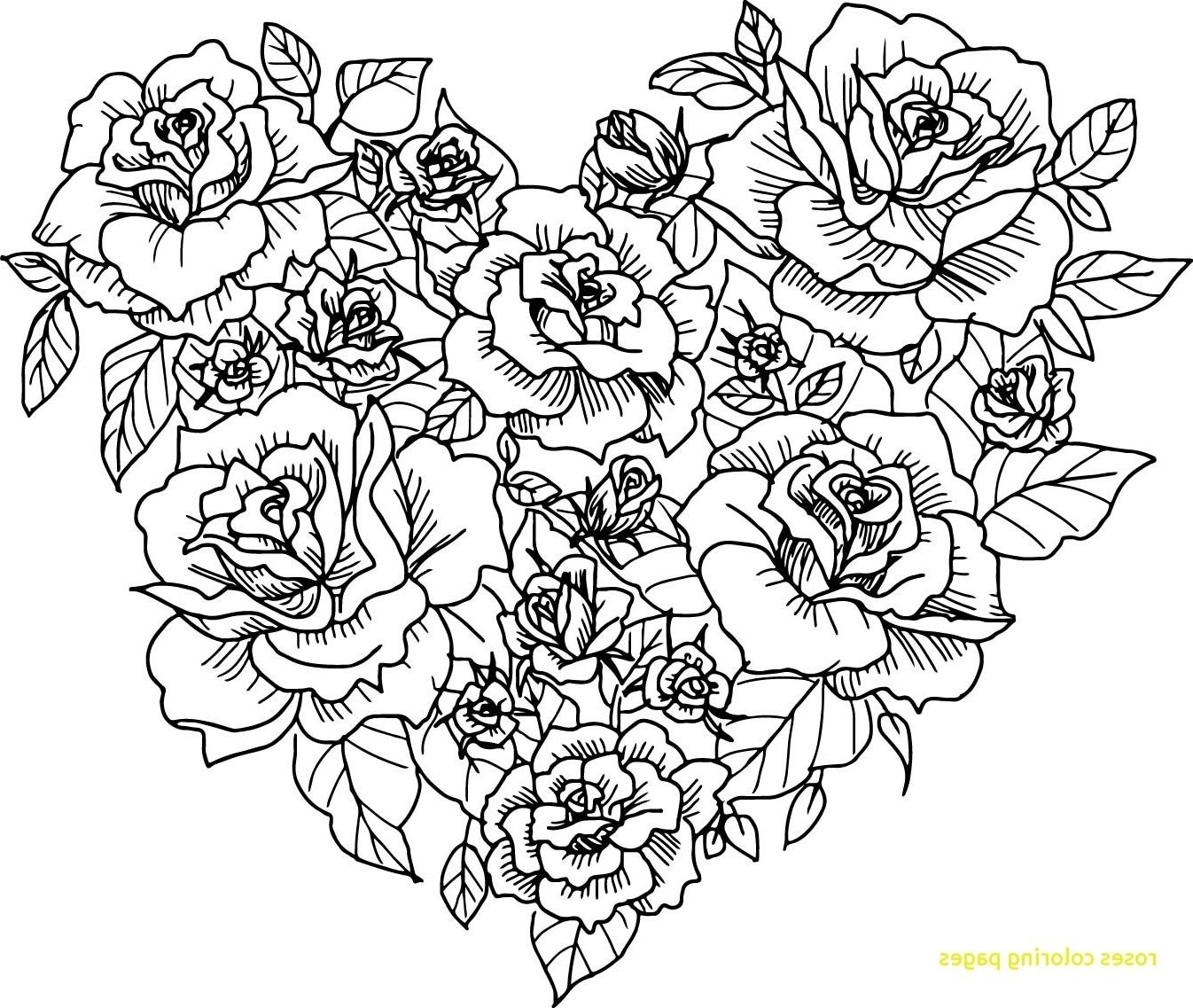 rose colouring pages coloring ville pages rose colouring