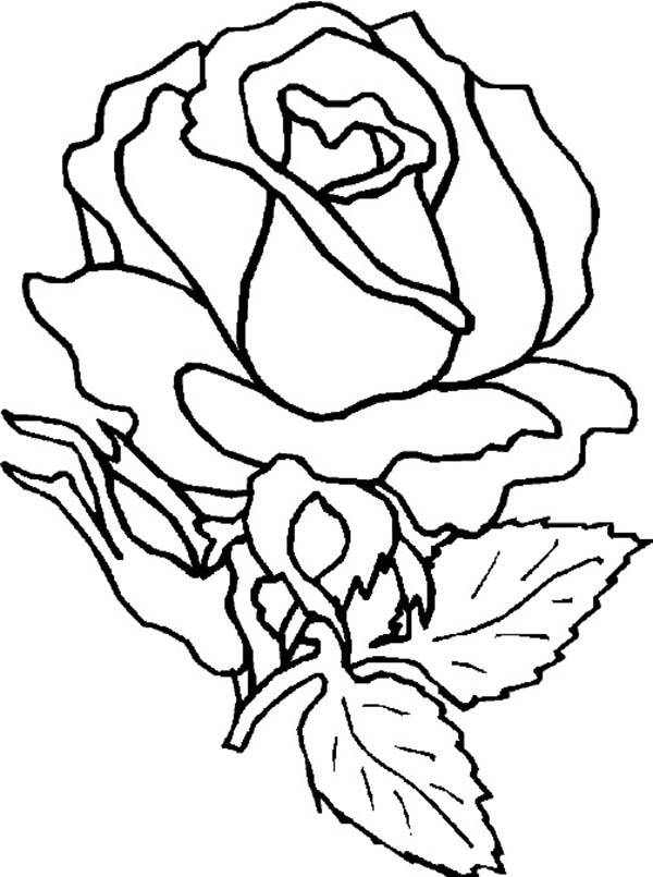 rose flower coloring pictures coloring blog for kids rose flower coloring page pictures pictures rose flower coloring