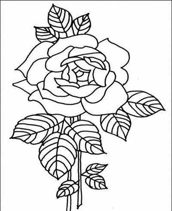 rose flower coloring pictures printable rose coloring pages for kids flower rose pictures coloring
