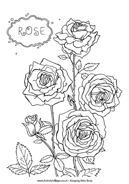 rose flower coloring pictures rose color clipart clipground flower rose coloring pictures