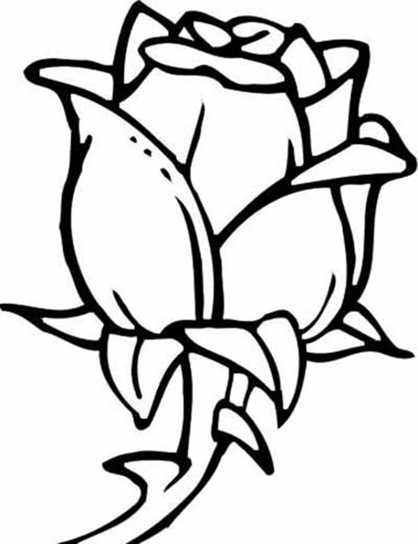 rose flower coloring pictures rose flower blooming coloring page kids play color flower pictures rose coloring